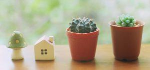 Jardim de suculentas: como começar o cultivo em casa